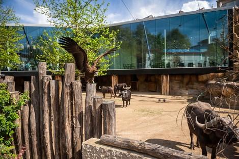 Cabinet Farris Architects Nouveaux espaces pour le zoo d'Anvers