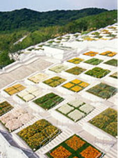 Yumebutai, Hawajishima <br>Tadao Ando 2000