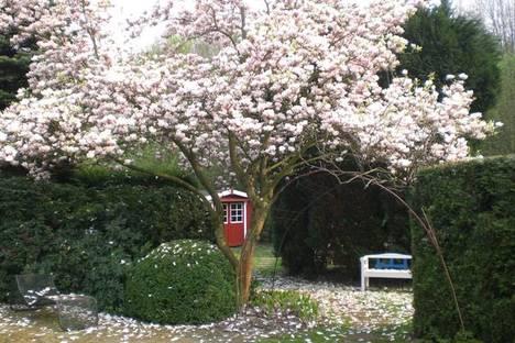 Jardin avec Magnolia. Avec l'aimable autorisation de Klaus-Dieter Bürklein